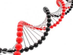 ген алопеции